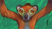 1024big_lemur